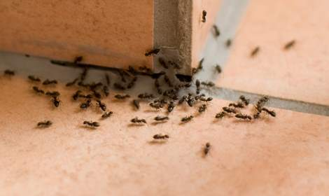 Mieren verdelgen Beilen